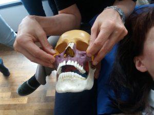 Ausbildung an der Wiener Schule für Craniosacrale Biodynamik